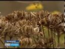 Жители деревни Юрятино объявили войну борщевику