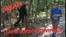 Парк живой природы Мануэль Антонио. Тихий океан. Капуцины, игуаны, ленивец, еноты.