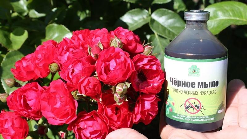 Натуральные средства защиты растений Черное мыло для цветов и овощей
