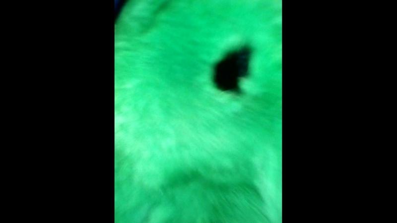 мой кролик
