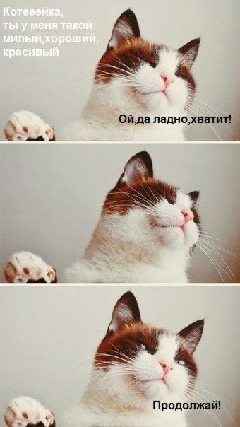 Фото кошки на аву стим - c18