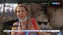 Новости на Россия 24 • В Греции считают, что причиной страшных пожаров стали поджоги