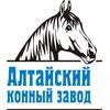 Алтайский конный завод