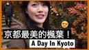 帶你們去看 京都賞楓人氣No 1永観堂!🍁 你同意它是最美的嗎?|MaoMaoTV