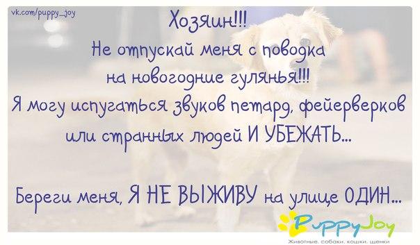 http://cs417217.userapi.com/v417217821/10a2/NH8mDx0NQSM.jpg