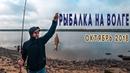РЫБАЛКА в Ярославской области Мышкино Подворье Плотва, Подлещик. Фидер из спиннинга