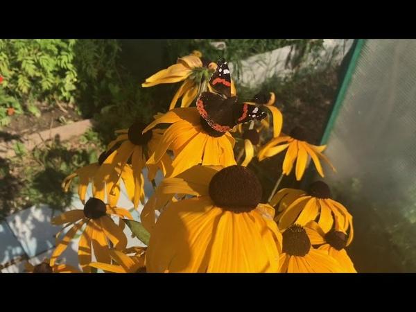 Дача огород теплица / планы на выходные/ подготовка к следующему сезону