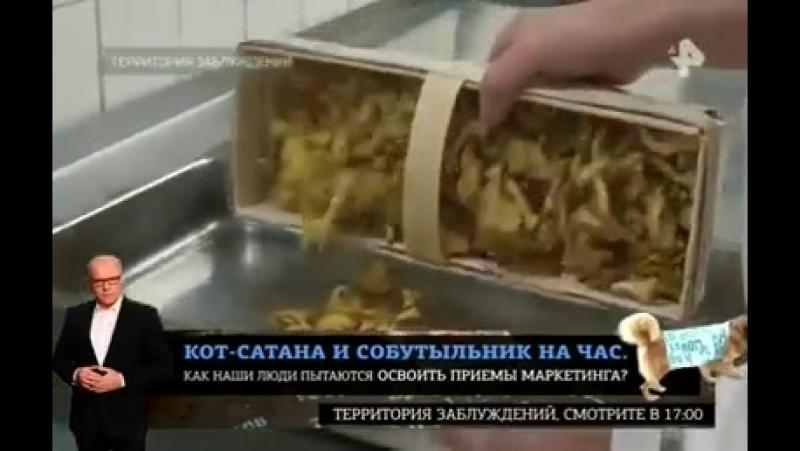 Американцы В США в прямом смысле слова нос воротят от европейской кухни. Однако эксперты отмечают, что тут дело может быть не то