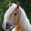 Лошади - это мой мир!