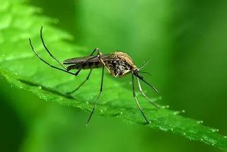 Остановим комаров