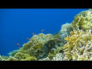 Моя подводная одиссея в Египте