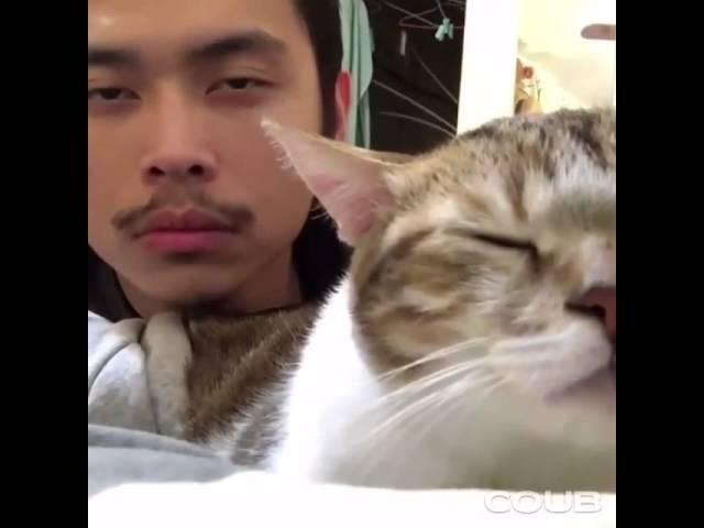 Кот и человек кивают головой под музыку