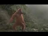Kaoma_Lambada_Remix_Video_Animal_Dance