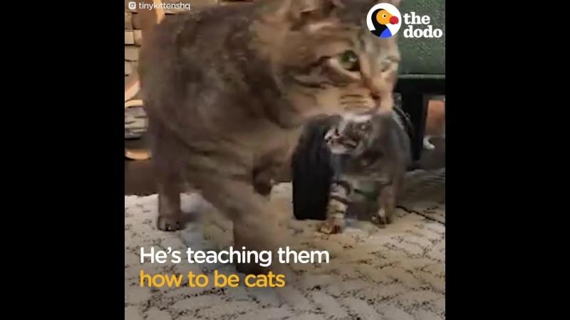 Grumpy Street Cat LOVES Being A Grandpa To Foster Kittens - GRANDPA MASON _ The