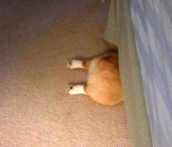 20 собак, которые думают, что отлично спрятались: ↪ Попа с лапами — это еще не собака! 😂