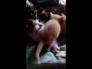 милые котята, и их кошка