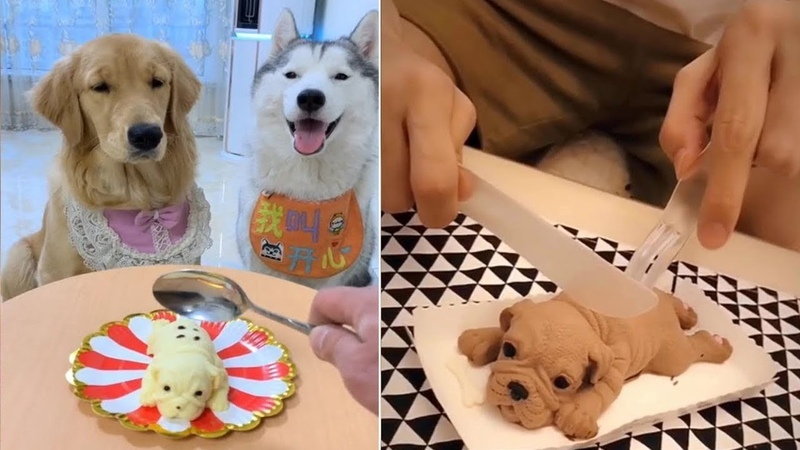 Dog Reaction to Cutting Cake * Funny Dog Cake Reaction Compilation