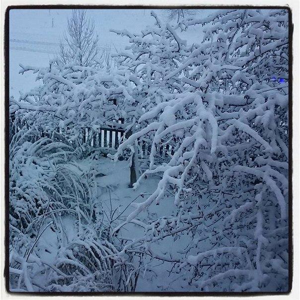Ну вот, опять заиночь снега наволило... Зима не просто близка, она пришла во весь рост.
