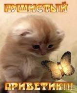 Пушистый приветик)))
