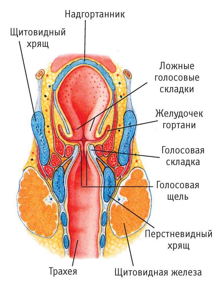 Боль или паралич лицевых мышц может быть признаком рака горла.