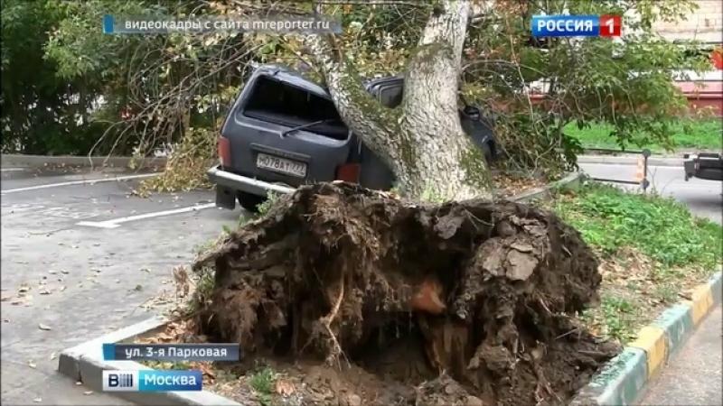 Вести-Москва • В Измайлове дерево ветром повалило на припаркованный автомобиль