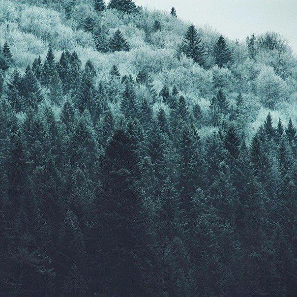 фото из альбома Алексея Губанова №5