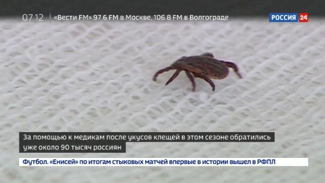 Новости на Россия 24 • В России начался сезон клещей