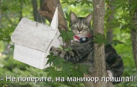 http://cs406129.userapi.com/v406129391/3546/X8rCr1SwzYM.jpg
