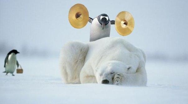 Доброе утро! Никогда не задумывались над тем как просыпаются животные в Антарктиде? Вот вам один из вариантов. И музыка в тему :)
