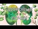 Почки - основа жизни   Елена Бахтина