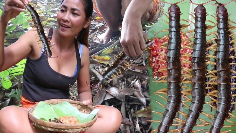 Survival skills: Catch centipede and grilled on clay for food - Cooking centipede eating delicious