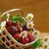Обмен цветами, саженцами в Ростовской области