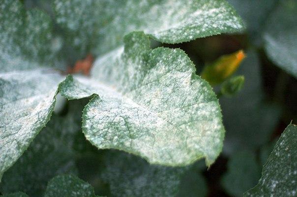 тест на вредителей на комнатных растениях
