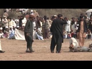 Dog fights illegal but still popular in Pakistan