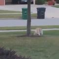 Кот сбежал