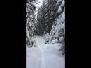 Джей и лес