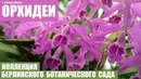 Коллекция орхидей Берлинского ботанического сада