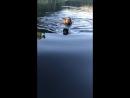 Девочки купаются 🌊