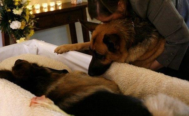 для поцелуев: собака хватает за одежду когда уходишь ЛАФТО