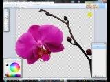 Урок для начинающих. Работа в графическом редакторе паинт.нет (Paint.net)