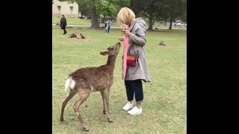 Алену Свиридову в Японии укусил олень
