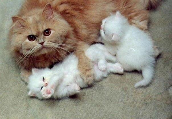 Мама в обиду не даст!