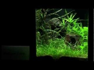 Aquascaping - Aquarium Ideas from The Art of the Planted Aquarium 2011, part 2
