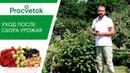 Сделайте ЭТО после сбора урожая СМОРОДИНЫ И КРЫЖОВНИКА Три обязательных приема
