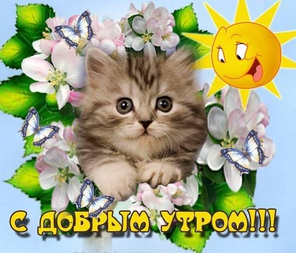 Доброе утро кот открытки