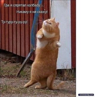 фото самые милые котята в мире