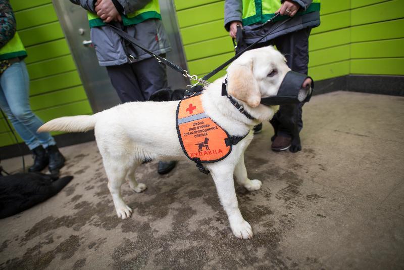 В ЮВАО обучат специальных собак для помощи незрячим пассажирам метро