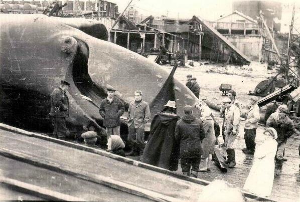 Курильское Цунами. Это цунами 1952 года считается одним из крупнейших подобных проявлений природной стихии в 20 веке. В ночь с 4 на 5 ноября в Тихий океан смыло целый город Северо-Курильск, где