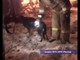Пес охранял горящий дом до приезда пожарных