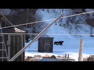 Бабушка прогоняет медведей  осторожно, крепкая лексика